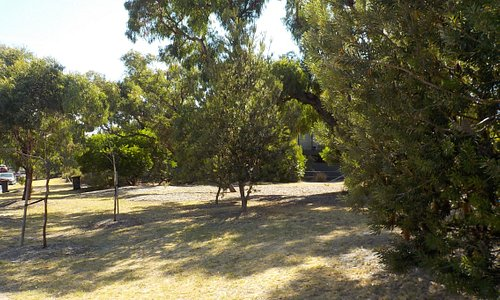 Summer lawns have dried out