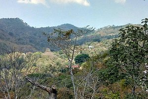 View of the coffee farm valley