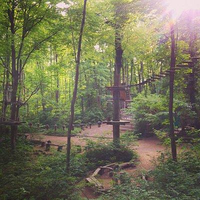 Der Waldseilpark Karlsruhe liegt auf dem Turmberg in einer völlig natürlichen Umgebung.