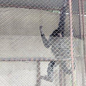 Lugar muy triste. Nos sorprendimos al encontrar dentro algunos monos y otros animales en jaulas pequeñisimas e individuales. No vayan.