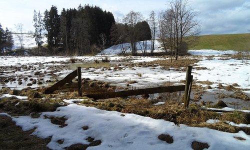 Back garden Alzenhof