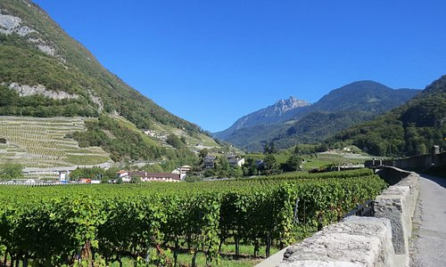 Ballade dans le vignoble entourant le Château d'Aigle