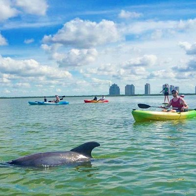 Kayaking with dolphins at Estero Bay!