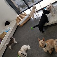A home away from home for your Pupper! Small dog focused, boutique style accommodations in an urban setting.