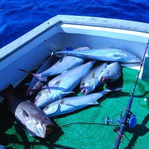 private captain manolis fishing trip