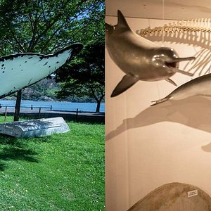 A seaside park hosts this interpretive center which introduces visitors to the world of whales and dolphins in Espírito Santo and the efforts to protect them.