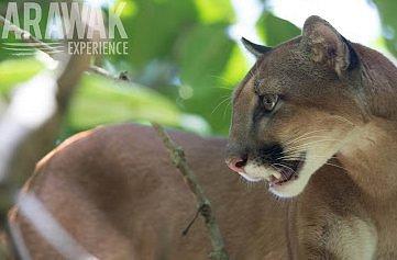 Arawak Experience est une agence locale réceptive consacrée à l'organisation de voyage sur-mesure au Costa Rica et en Colombie.