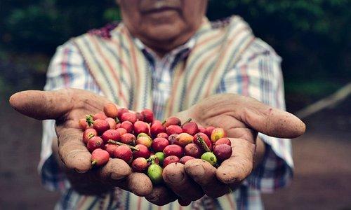 Organic Coffee by Adriano Cabrera
