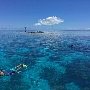 Pufana coral Pinacle