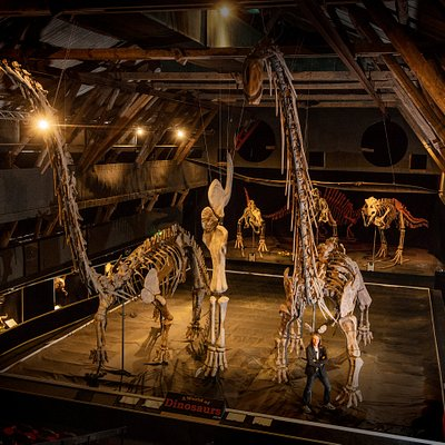 Giants of the Earth Meet the most gigantic dinosaurs among them all as 22m long & 8m high sauropods, the flying lizard Ornithocheirus with an incredible 12m wingspan, 3 T-Rex and the front leg belonging to one of the largest dinosaurs ever, the mighty 35-40m long & 15m high Mamenchisaurus.