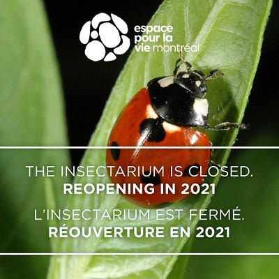THE INSECTARIUM IS CLOSED UNTIL 2021. But you can enjoy the Botanical Garden as well as the numerous shows at the Planétarium Rio Tinto Alcan whie you are in Montréal!  L'INSECTARIUM EST FERMÉ JUSQU'EN 2021, mais profitez du Jardin botanique et du Planétarium Rio Tinto Alcan lors de votre visite à Montréal !