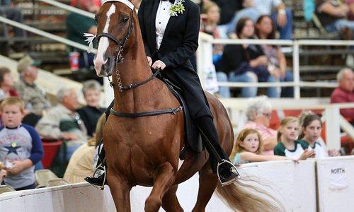 Racking Horse Celebration