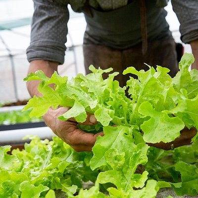 It is predicted that by 2050, close to 70% of our population will be living in cities and food production needs to double to keep up with the demand of feeding the population. Aquaponics is the key to bringing food to the people. Growing food with up to 90% less water and growing four times more per/m2