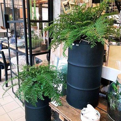 Żywe rośliny w ciekawych donicach.  Live plants in interesting pots.