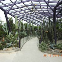 Lovely dessert plants and Cacti on display at the Sun Pavilion