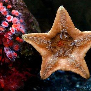 Up close look at a starfish!