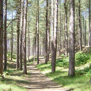 Woodland Path, Formby