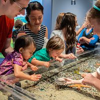The Murphy Ocean Gallery explores the essential role the Ocean plays in the welfare of our planet through wet, wild, and wondrous interactive exhibits.