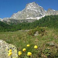 Panorama dell' Alpe Veglia