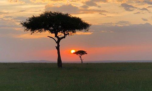 The money-shot: African Savanna.