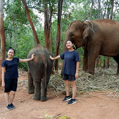 Hangout with elephants at enclosure time.