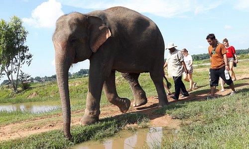 Elephant walk to river.