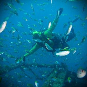 Sealife on the ex HMAS Tobruk