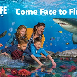 Save BIG on tickets by buying tickets online: visitsealife.com/minnesota/tickets