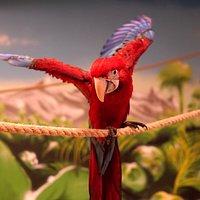 #papugarniamazury #papugarniaelk #mazurskietropiki