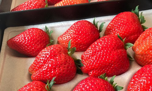 Picking 8 different types of Strawberries from all around Japan!