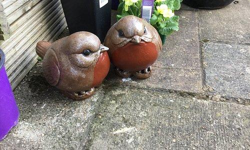 2 fat robins