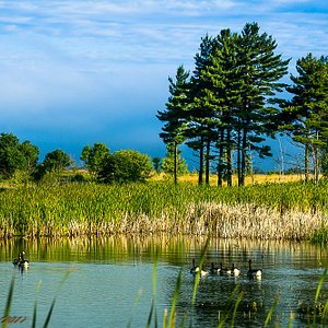 A family of Geese enjoy the tranquility provided by the Refuge.