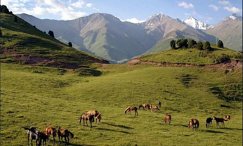 The Fergana Valley is a depression limited by the Tien Shan mountains in the north and the Alay mountains in the south. It is the most fertile area in Uzbekistan and in the southern part of Central Asia, hence it became the agricultural heartland in the region.
