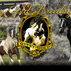 Gypsy Gold's breeding program is the foundation of the Gypsy Vanner breed.