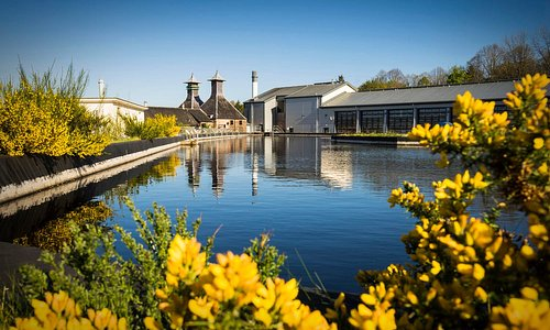 Spring day at Glen Ord Distillery with beautiful blooming gorse flowers.