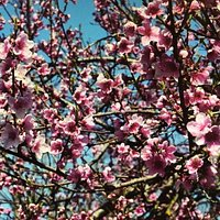 Японский сад Шесть чувств