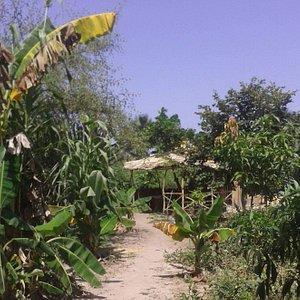Big Tree Garden is run by Abdou Bojang as a Community Garden.