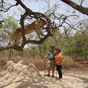 Bako Tours the safari specialist