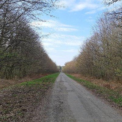 Promenade à la forêt de Rennes