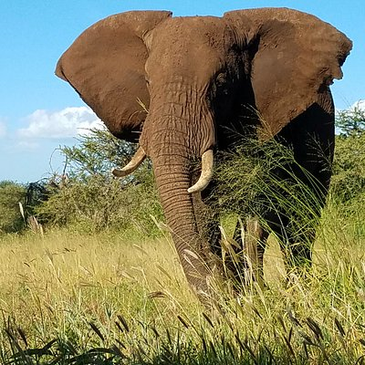 Elephant in Tarangire!!