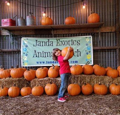 Janda Exotics pumpkin patch