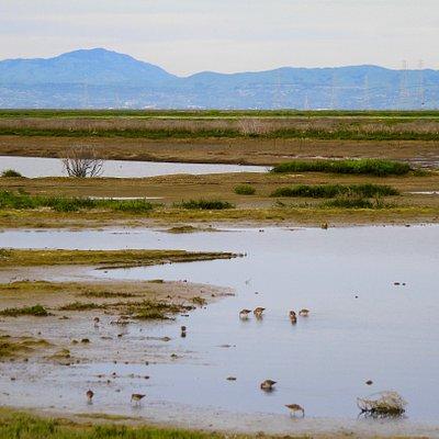 Recently reclaimed wetlands of Bair Island marshlands