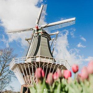 Veja as belezas do parque das flores Keukenhof. Foto por Emily Rocha