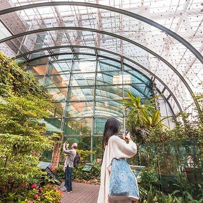 Butterfly Garden at Terminal 3