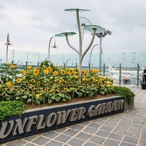 Sunflower Garden at Terminal 2