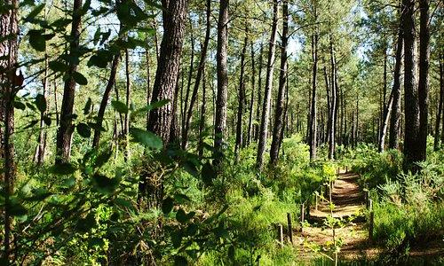 Mysterra - le parc aux 7 labyrinthes
