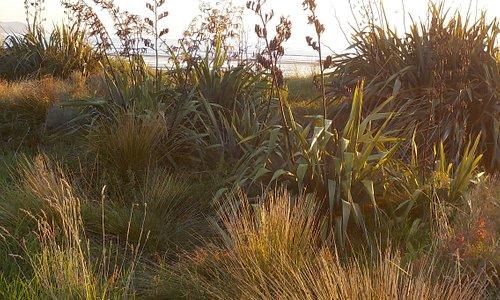 Vegetation by path at Paraparaumu