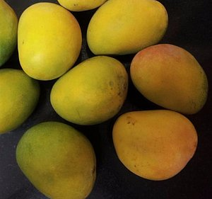 Fresh Mango from Salem