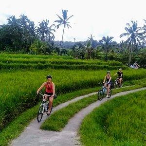 Rice field cycling!