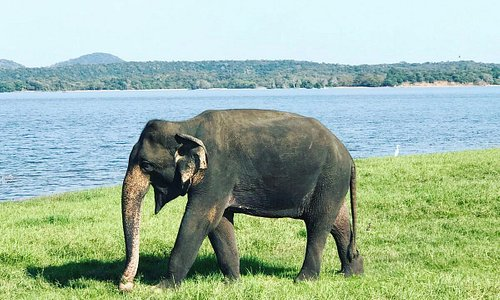Minneriya National park evening safari start 1.00pm. https://www.tripadvisor.com/Attraction_Review-g304133-d16733491-Reviews-Mathisha_Jeep_S